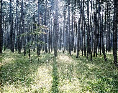 Wald - p1205m1065994 von Klaus Pichler