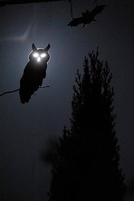 Halloween - p8290162 von Régis Domergue