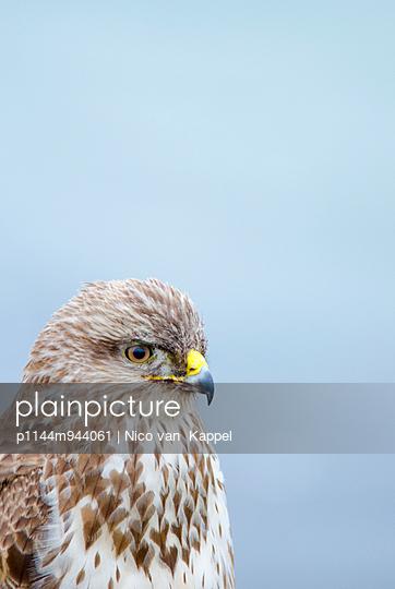 common buzzard - p1144m944061 by Nico van  Kappel