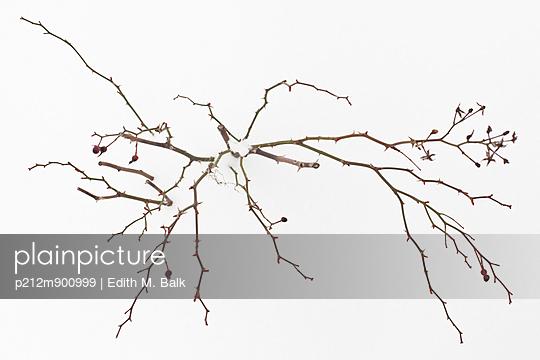 Rosenstrauch im Winter - p212m900999 von Edith M. Balk
