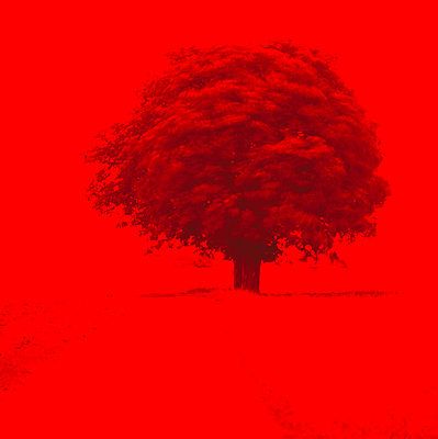 Tree on red background - p575m805158f by Dick Clevestam