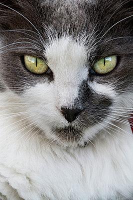 Gefleckte Katze - p1097m918553 von Mélanie Bahuon