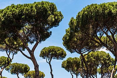 Bäume - p488m1446007 von Bias