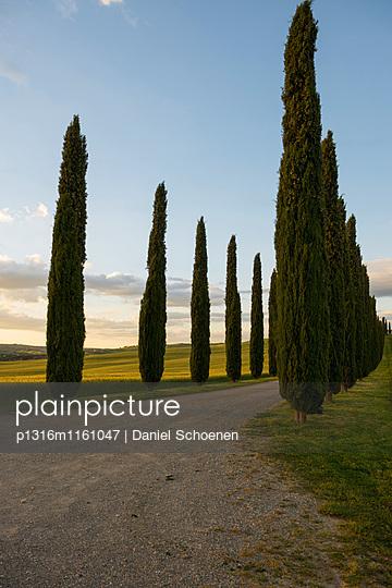 Landschaft bei San Quirico d`Orcia, Val d`Orcia, Provinz Siena, Toskana, Italien, UNESCO Welterbe - p1316m1161047 von Daniel Schoenen