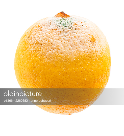 Mouldy lemon against white background - p1366m2260583 by anne schubert