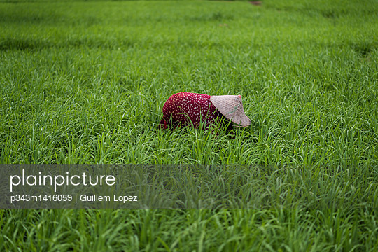 A Rice Field Worker Working At Field, Sumatra, Indonesia - p343m1416059 by Guillem Lopez