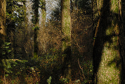 Forest - p56710495 by Ilka Kramer