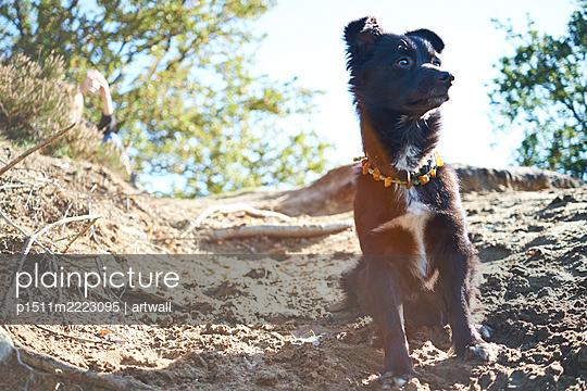 Wachsamer Hund mit verziertem Halsband - p1511m2223095 von artwall