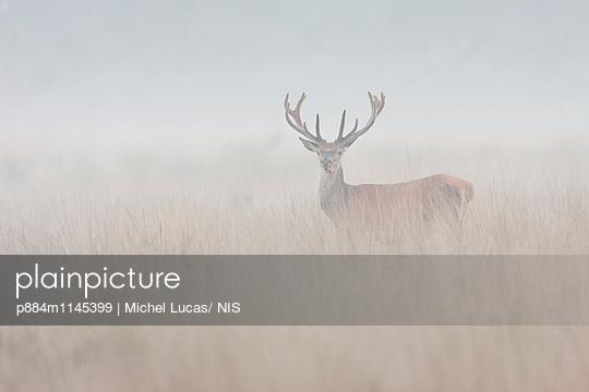 p884m1145399 von Michel Lucas/ NIS