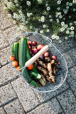 Germany, Basket with freshly harvested vegetables standing on cobblestone footpath - p300m2198163 by Eva Gruendemann