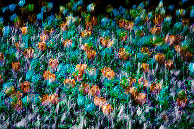 Tulips abstract - p4150526 by Tanja Luther