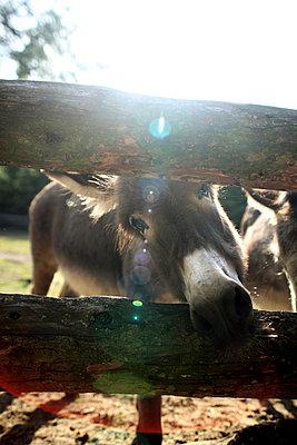 Donkey - p9020038 by Mölleken