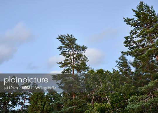 Bäume im Wind - p1124m1165531 von Willing-Holtz