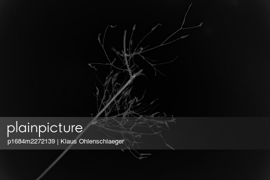 p1684m2272139 by Klaus Ohlenschlaeger