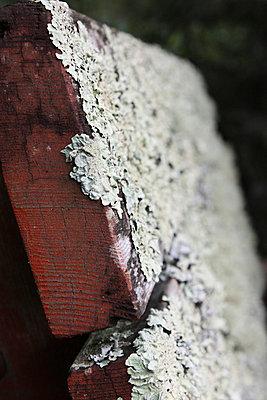 Moldy bench - p5780052 by Genie C Balantac