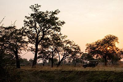 Auf Safari im Südluangwa-Nationalpark - p842m1538223 von Renée Del Missier