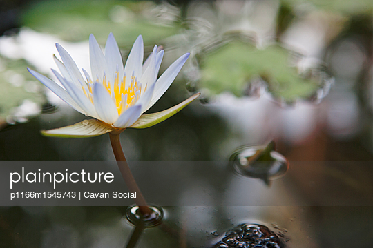 p1166m1545743 von Cavan Social