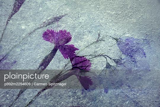 p992m2294609 by Carmen Spitznagel