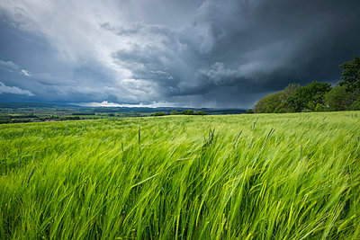 Germany, Baden-Wuerttemberg, Constance district, barkley field at Hegau by storm - p300m950294f by Markus Keller