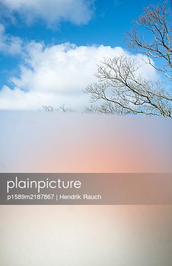 Leafless tree - p1589m2187867 by Hendrik Rauch