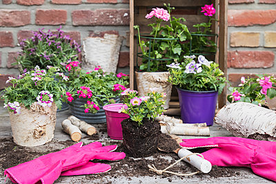 Flowers in pots and gardening gloves - p300m2156259 by Gaby Wojciech