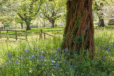 Trewithen Gardens, near Truro, Cornwall, England - p652m972018 by Paul Harris photography