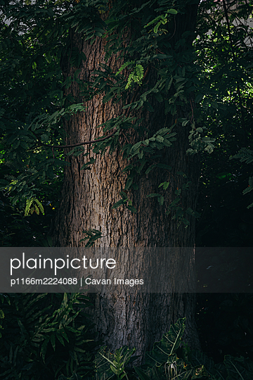 Giant tree trunk with rough green leaves in vertical background - p1166m2224088 by Cavan Images