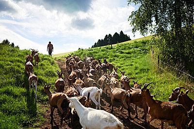 Ziegenherde, Katzental - p1203m1025880 von Bernd Schumacher