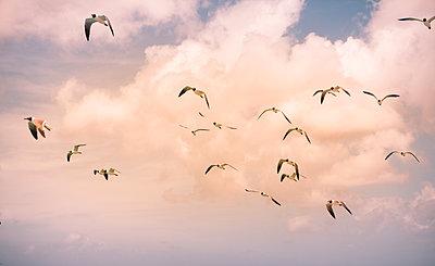 Möwen fliegen hoch vor Wolken - p045m2020807 von Jasmin Sander