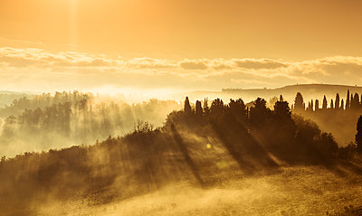Italy, Tuscany, Val d'Orcia, landscape in morning fog - p300m1206331 by Christina Falkenberg