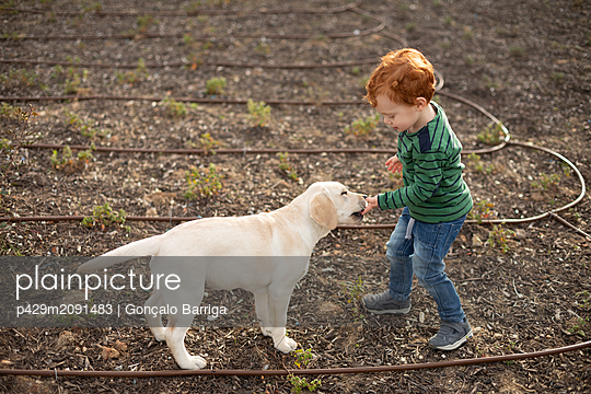 Boy giving pet puppy training treat - p429m2091483 by Gonçalo Barriga