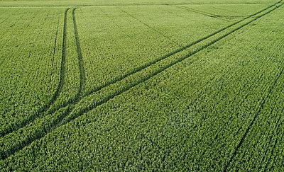 Green fields with tracks - p1132m2126191 by Mischa Keijser