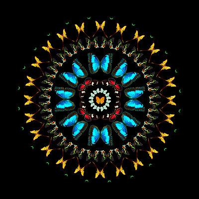 Mandala - p587m1104312 by Spitta + Hellwig