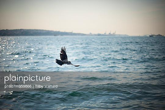 Flying over Bosphorus - p1007m959866 by Tilby Vattard