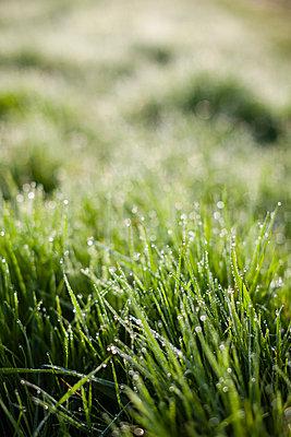 Wet grass - p1057m1005058 by Stephen Shepherd
