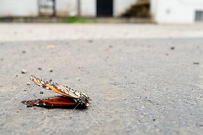 Dead butterfly - p3720421 by James Godman