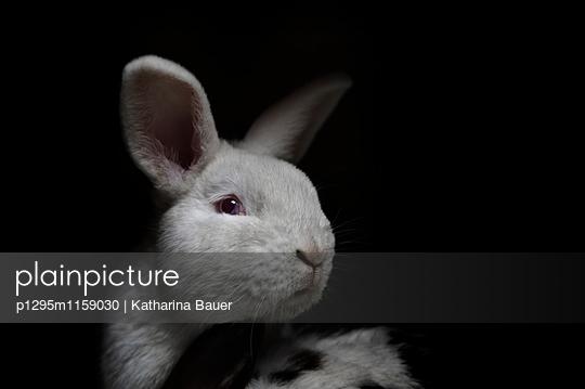 Weißer Hase - p1295m1159030 von Katharina Bauer