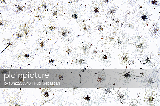 p719m2253948 by Rudi Sebastian