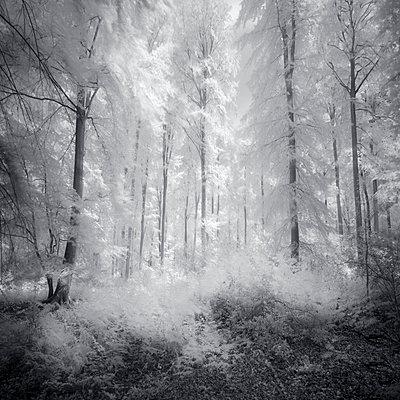 À L'orée De Mes Nuits - p1137m2008723 by Yann Grancher