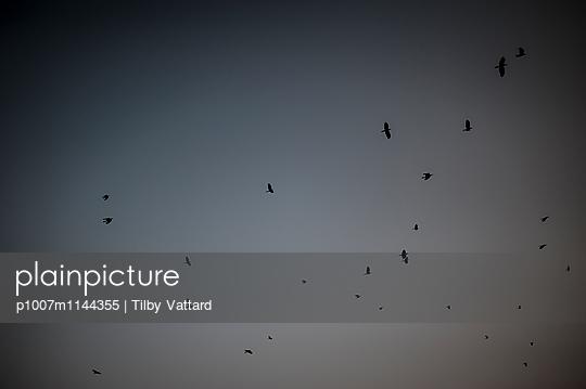 Birds in the sky - p1007m1144355 by Tilby Vattard