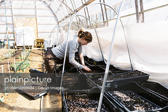 A young female farmer checking her bulb flowers in the greenhouse - p1166m2269684 by Cavan Images
