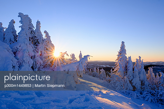 Germany, Bavaria, Bavarian Forest in winter, Great Arber, snow-capped spruces at sunrise - p300m1449853 by Martin Siepmann