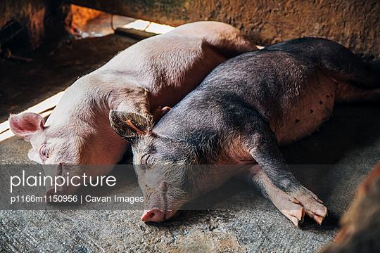 p1166m1150956 von Cavan Images