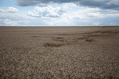 Landwirtschaft - p1058m817110 von Fanny Legros