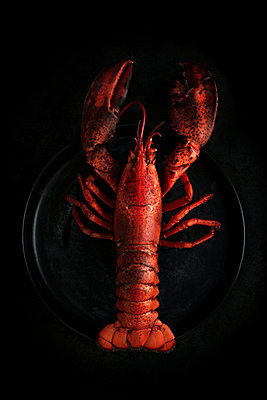 Cooked lobster - p1276m2127037 by LIQUID
