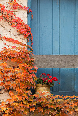 Geranium in Pot by Door with Fall Leaves - p1331m1196424 by Margie Hurwich