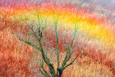 Spain, Province of Cuenca, Canamares, High angle view of bare tree standing in autumn reed field - p300m2198000 by David Santiago Garcia