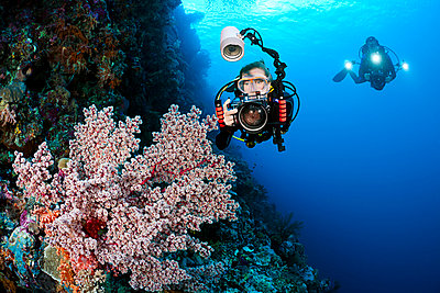 Indonesia, Divers photographing soft coral on the reef. - p442m935214 by Dave Fleetham