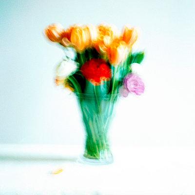 Tulip - p5450059 by Ulf Philipowski