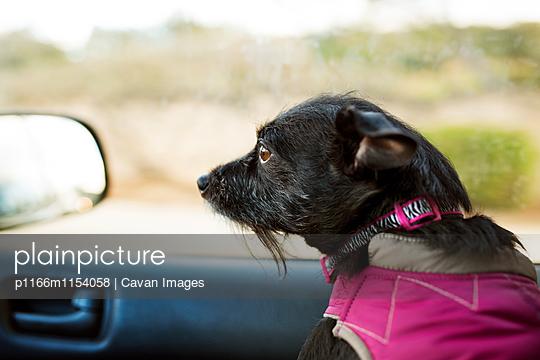 p1166m1154058 von Cavan Images